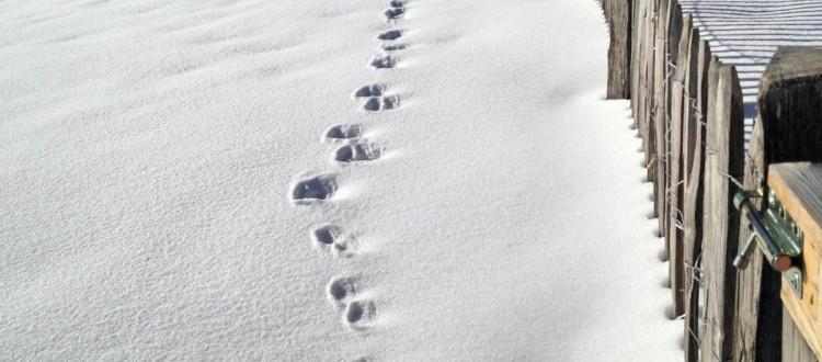 Spuren im Schnee Samstagskaffee